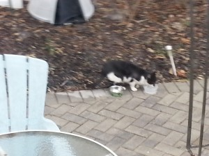 First Pictures of Tuxedo Cat in attempt to rescue