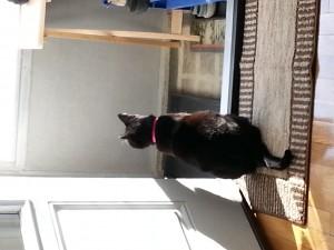Sammie enjoying fresh air