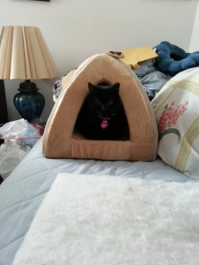 Sammie in her new room on her new bed